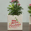 Buy Personalized Set of Ceramic Planters for Christmas & New Year