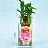 Personalized Two Layer Lucky Bamboo In A Glass Vase (Moderate Sunlight/Less Water)