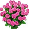 Rose poem flowers