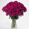 Sweet Williams Amazon Neon Purple (Bunch of 10) Online